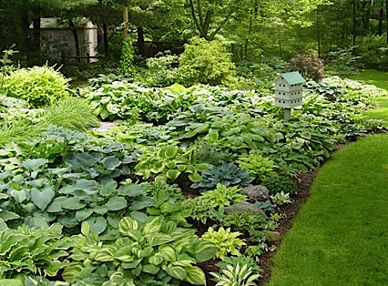 Mixed-Hosta-Display1